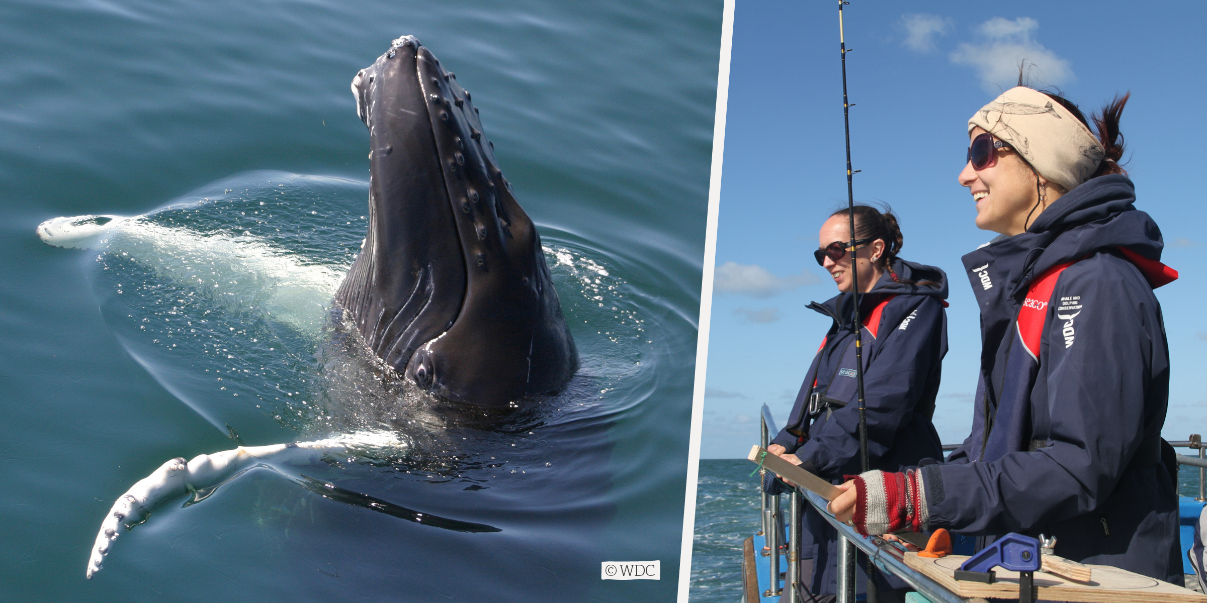 WDC researching whales on a boat