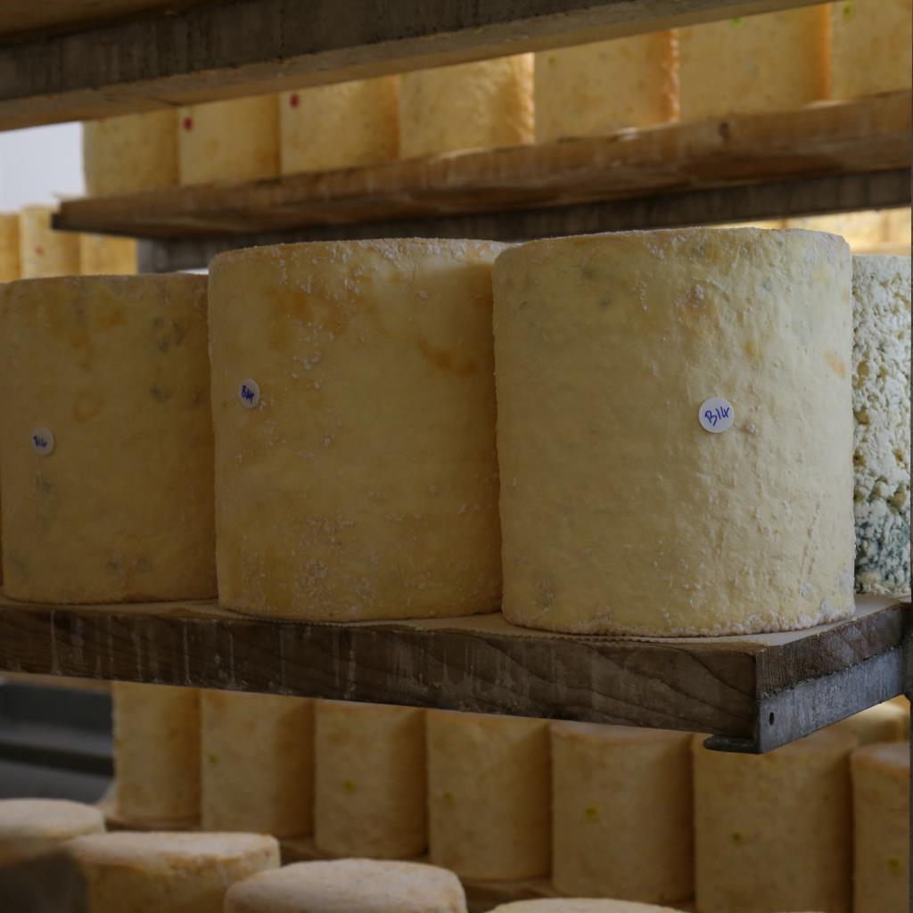 Bath Cheese 3