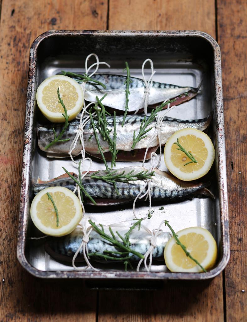 MCS-Fish-Blog-5