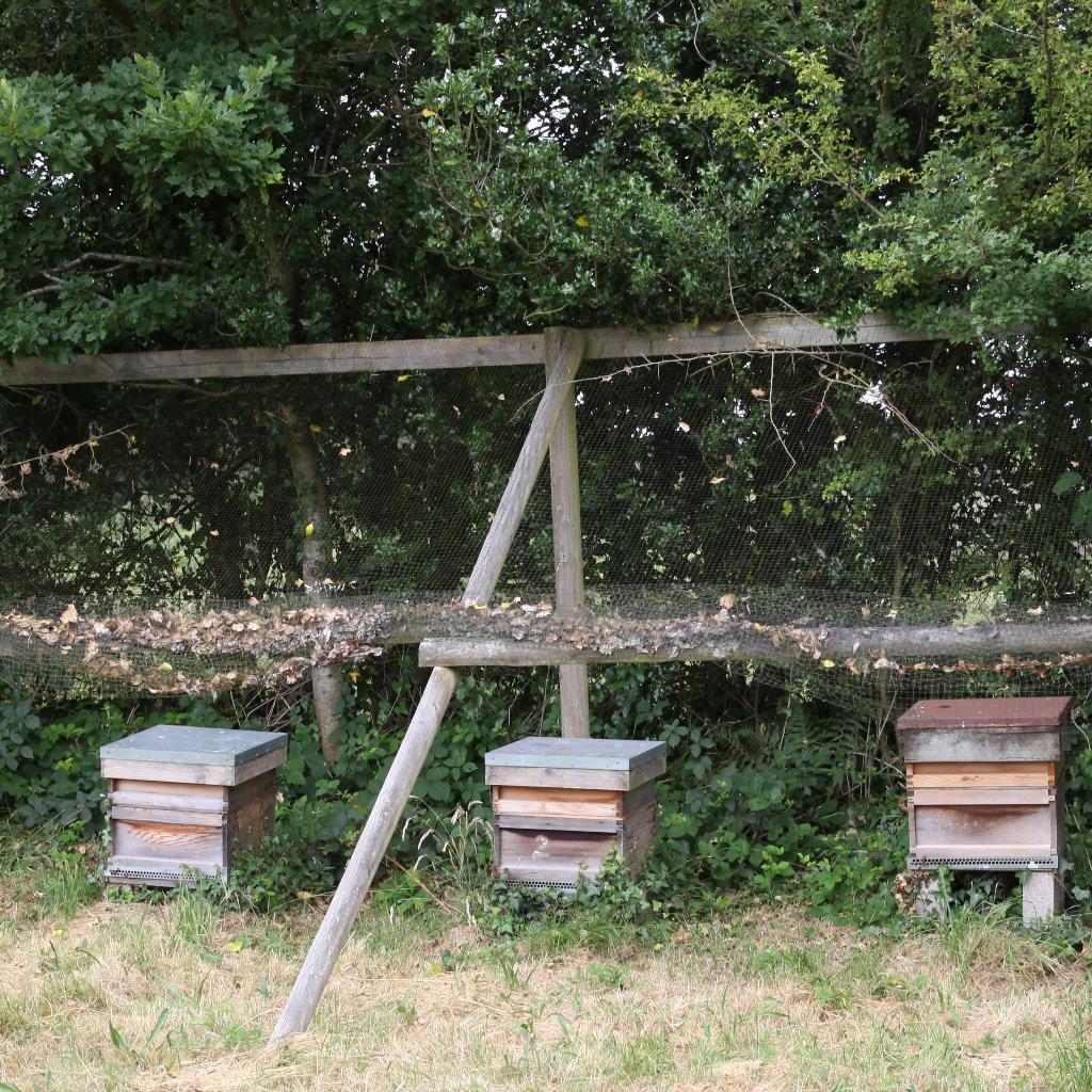 Turf-Croft-Bees