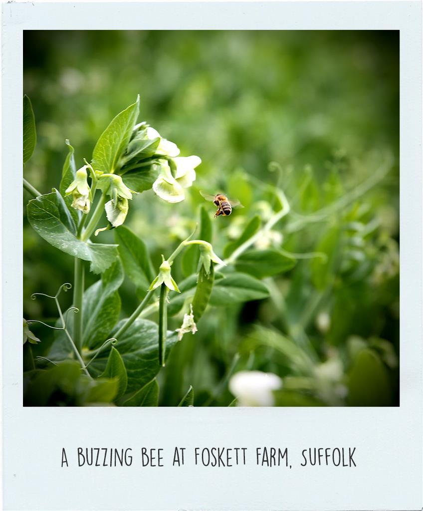 Pollinator-3