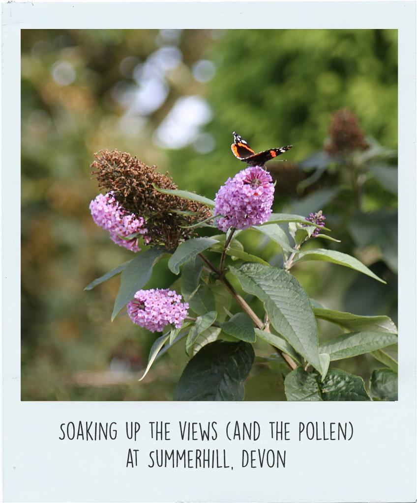 Pollinator-5