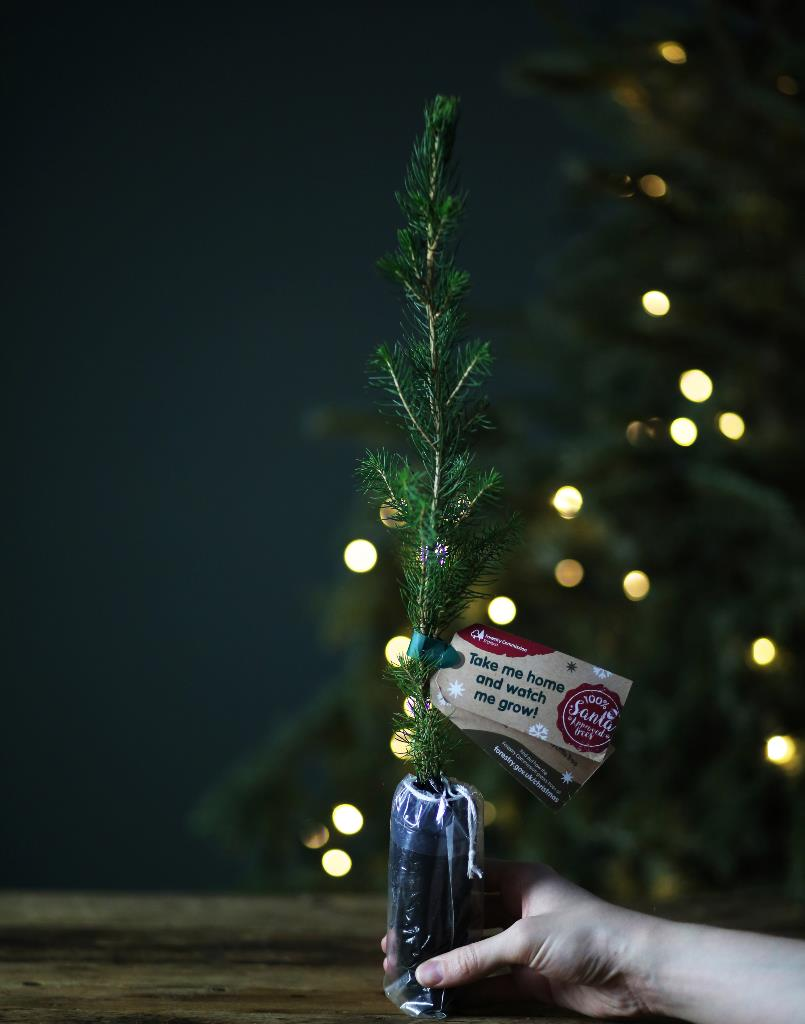 Mini-Xmas-Tree-Square