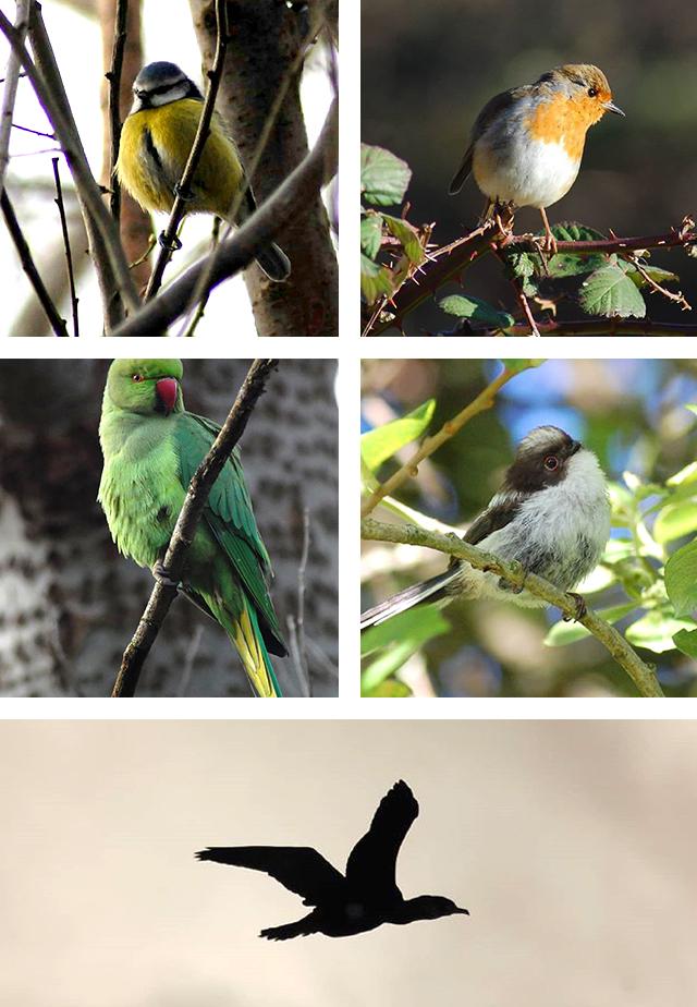 How to help birds in winter