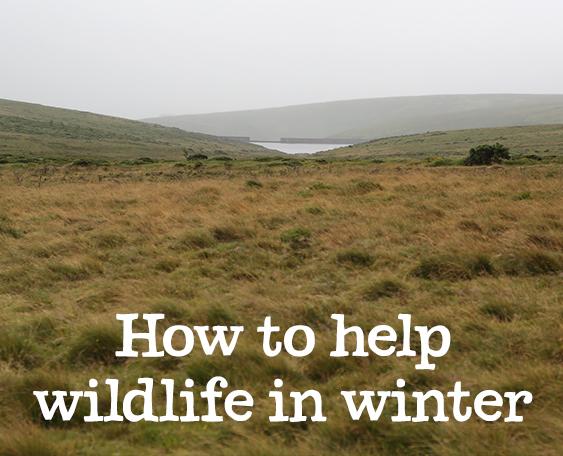How to help wildlife in winter