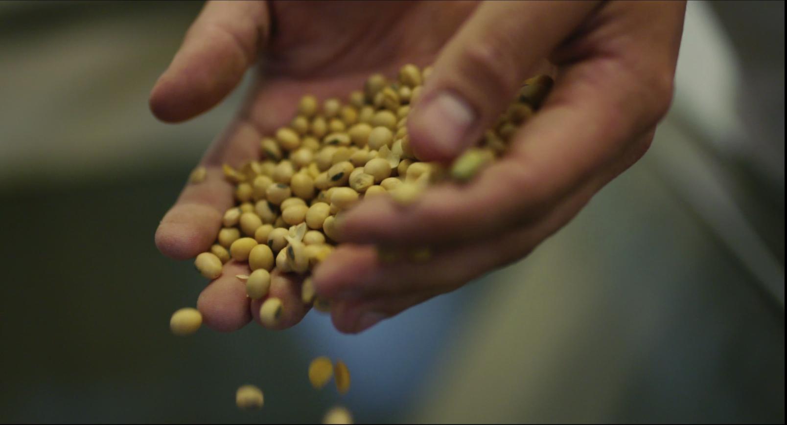 Sojade's soya beans