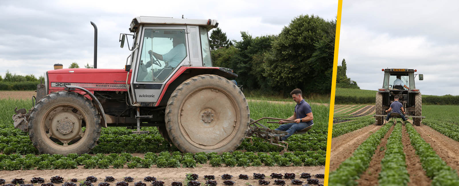 Ben and Colin Andrews ploughing lettuce