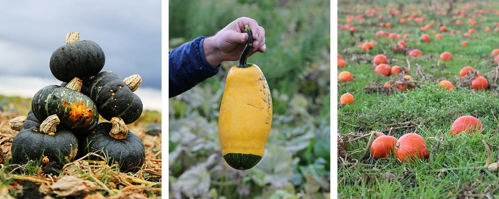 Autumnal squash