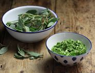 Wild Sea Purslane Pesto