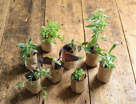 Fruit & veg   Fresh herbs & spices   Abel & Cole
